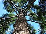 Дерева - Мир Бисера.