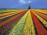 Недвижимость Нидерландов: организация OMA выиграла в состязании на создание