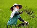 На средний класс Вьетнама нужно основной спрос на недвижимость