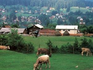 С 2014 года иностранцам разрешат приобретать земельные угодья в Румынии